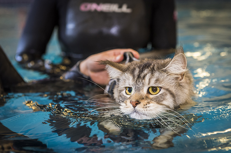 Cat In Swimming Pool : Hydrotherapy fitzpatrick referrals