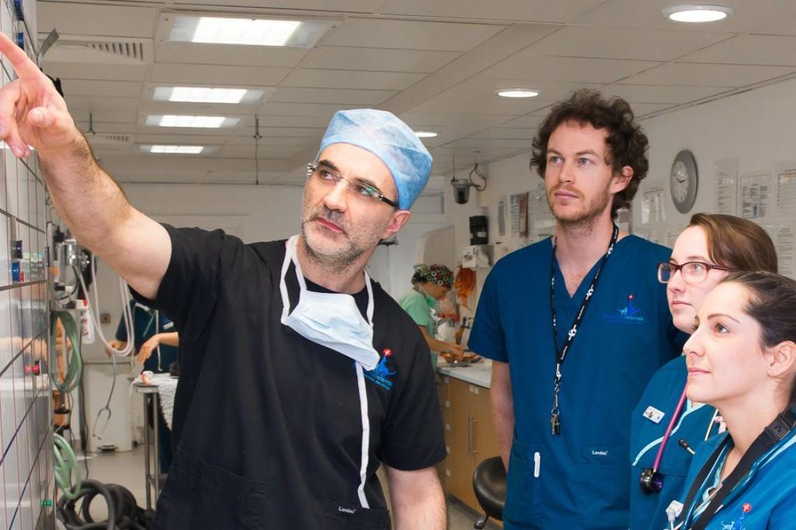 Veterinary-Professionals