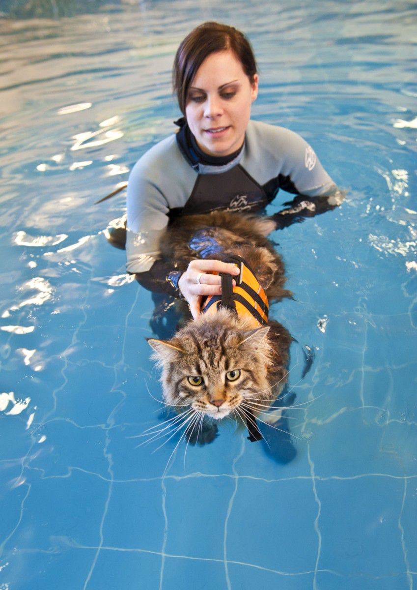 Feline rehabilitation in the hydrotherapy pool
