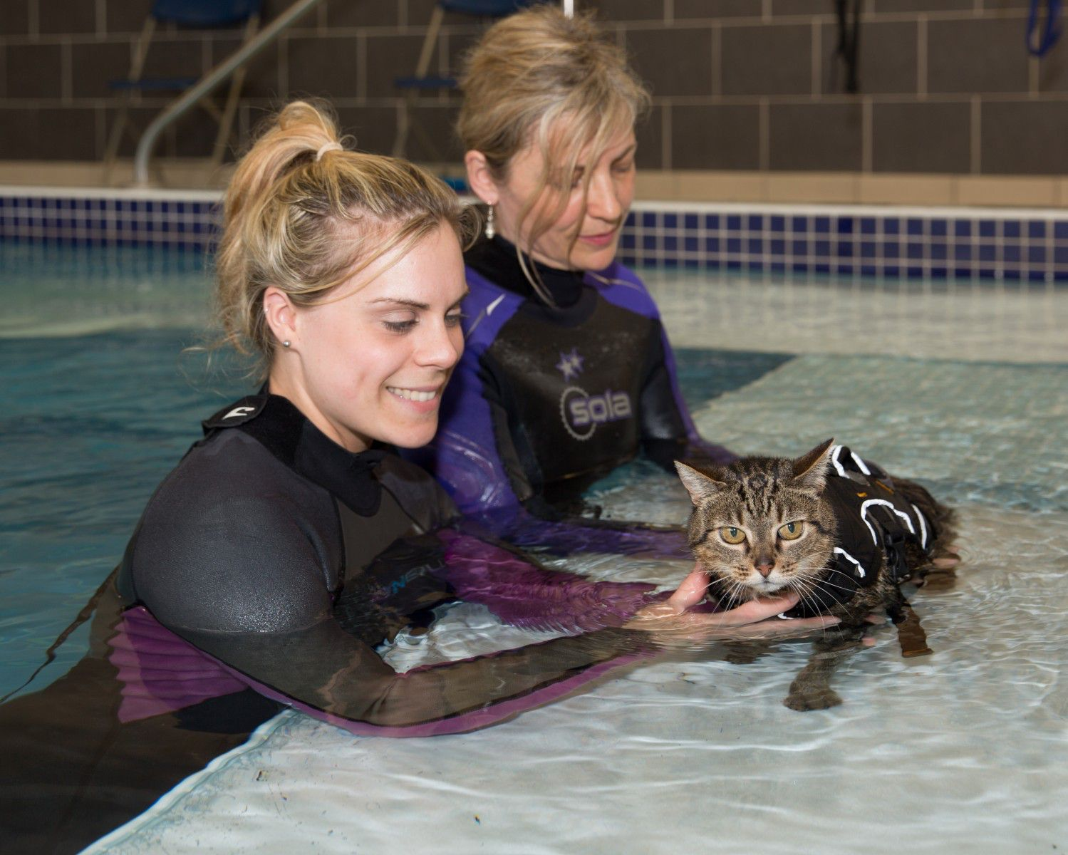 Cat having hydrotherapy at Fitzpatrick Referrals Orthopaedics and Neurology Hospital Eashing