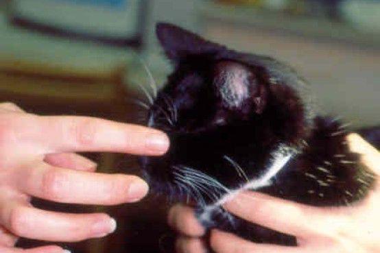 Palpebral (blink) reflex during neurological exam