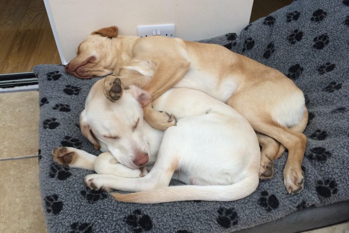 Louie and Finn