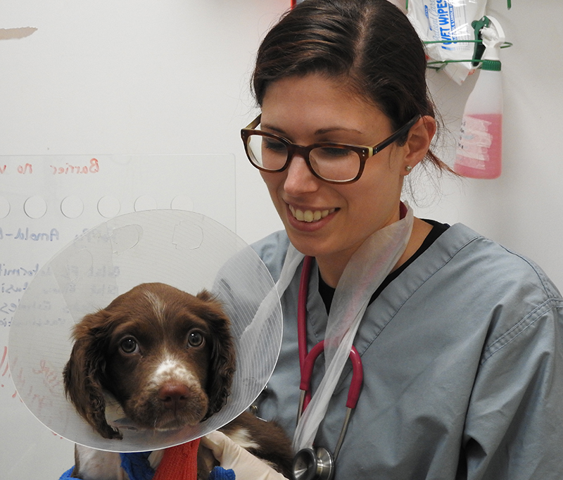 Visiting Veterinary Student Lauren from the University of Sydney with a patient at Fitzpatrick Referrals