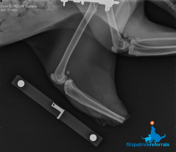 Radiograph of Pixie