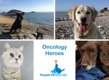Feline and canine oncology heroes
