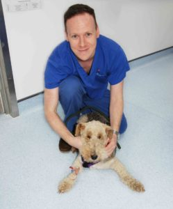 Dr Gerard McLauchlin and Rags at Fitzpatrick Referrals