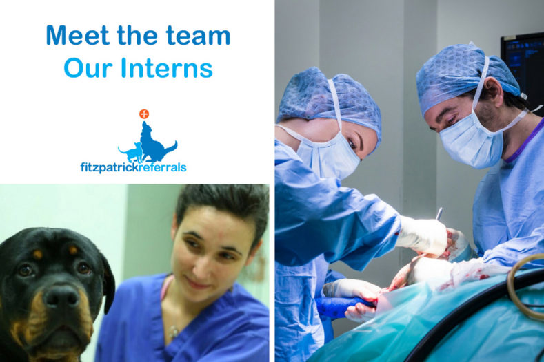 Fitzpatrick Referrals Interns