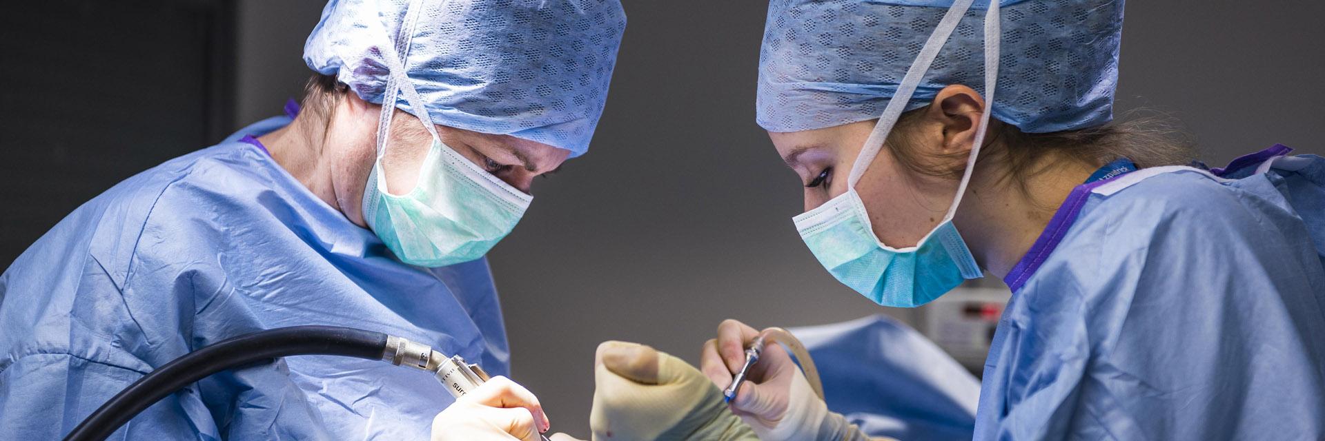 Neurology Service Fitzpatrick Referrals