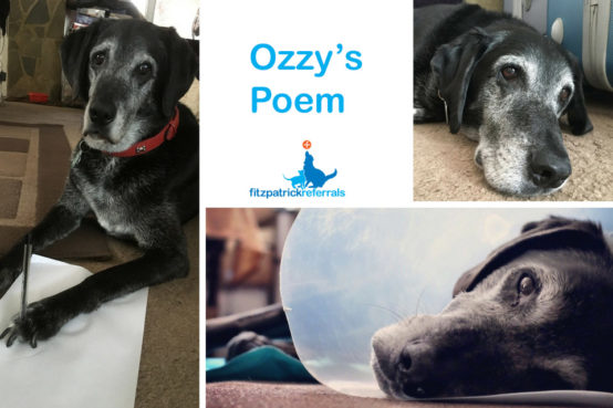 Ozzy's thank you poem for Fitzpatrick Referrals