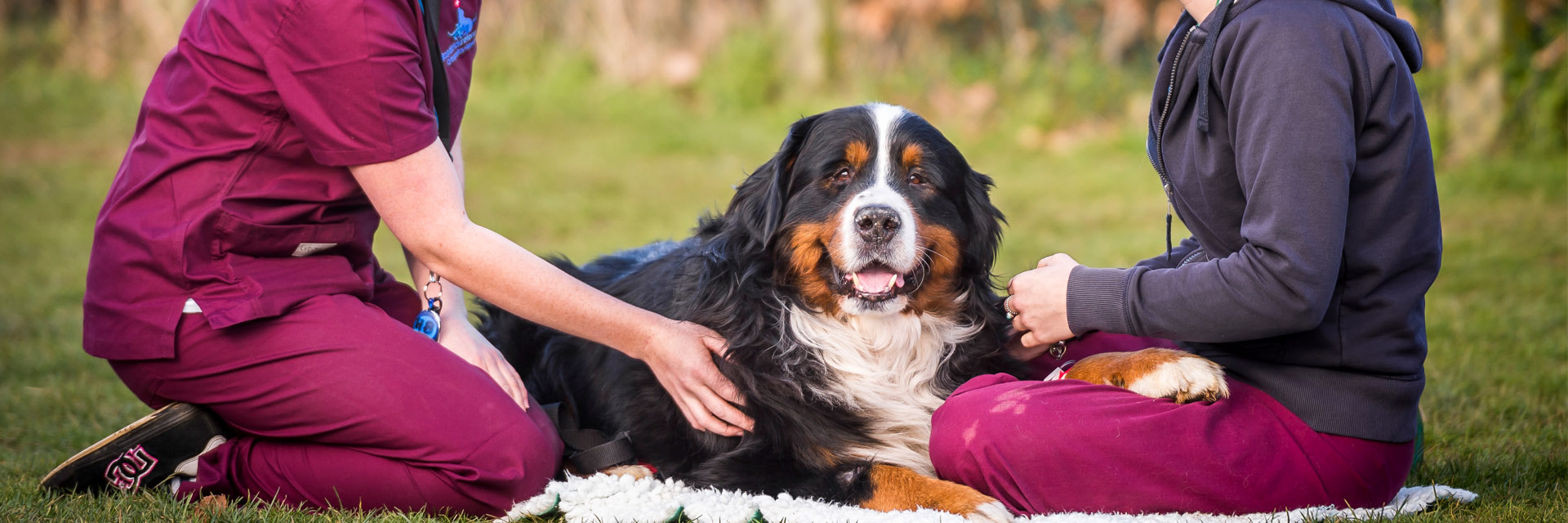 Veterinary auxiliary jobs Fitzpatrick Referrals Orthopaedics and Neurology
