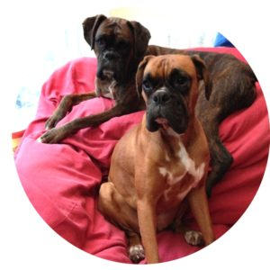Lilly and Tara fully recovered after TPLO surgery at Fitzpatrick Referrals