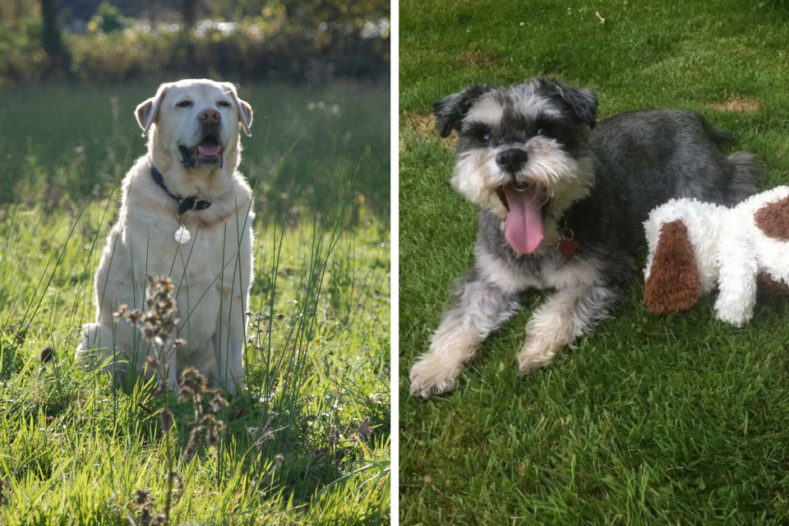 Dogs living well with cancer Fitzpatrick Referrals