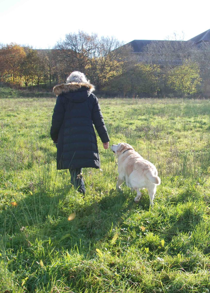 Fitzpatrick Referrals oncology patient Monty walking with his owner
