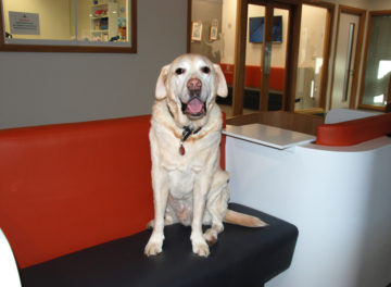 Dog waiting in reception at Fitzpatrick Referrals cancer hospital