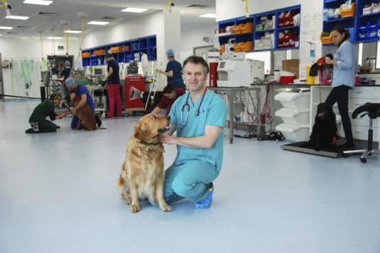 Professor Nick Bacon with golden retreiver at Fitzpatrick Referrals Oncology & Soft Tissue