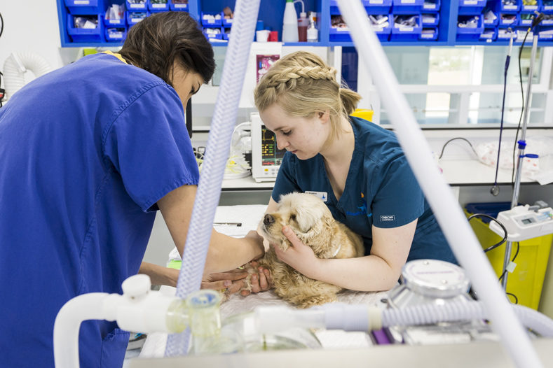 Nurse in prep with dog at Fitzpatrick Referrals Oncology & Soft Tissue