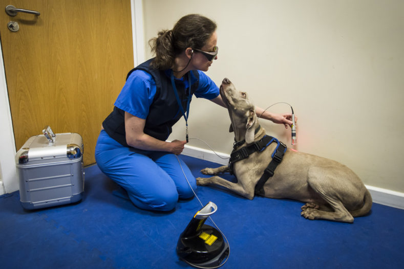 Physiotherapist treating dog at Fitzpatrick Referrals Orthopaedics and Neurology