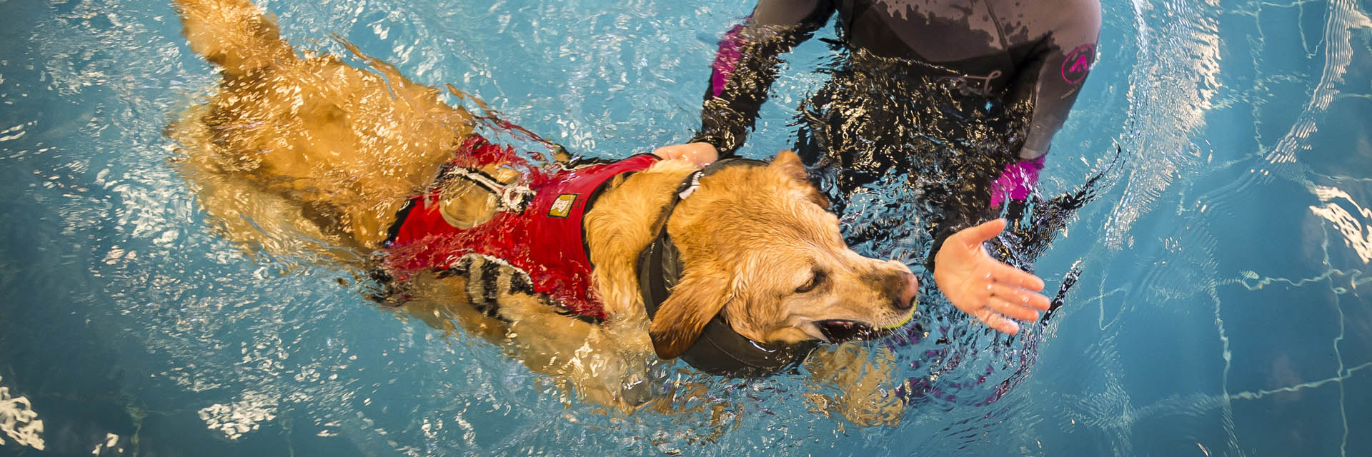 Dog having hydrotherapy at Fitzpatrick Referrals Rehabilitation Centre