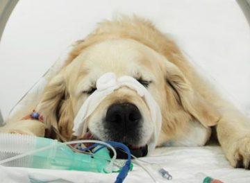 Dog in CT scanner at Fitzpatrick Referrals