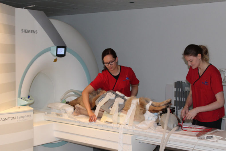Radiographers with patient for MRI scan at Fitzpatrick Referrals Orthopaedics and Neurology