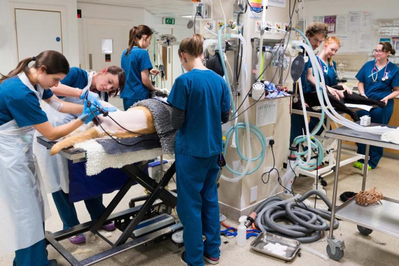 Veterinary nurses in the prep area at Fitzpatrick Referrals