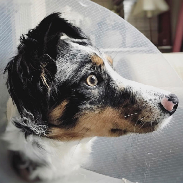 Fitzpatrick Referrals patient wearing a cone following surgery