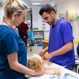 Intern (Duty Vet) in prep with patient