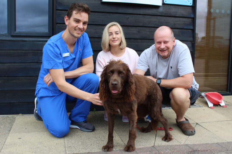 Spaniel with Surgical Resident and family at Fitzpatrick Referrals Orthopaedics and Neurology