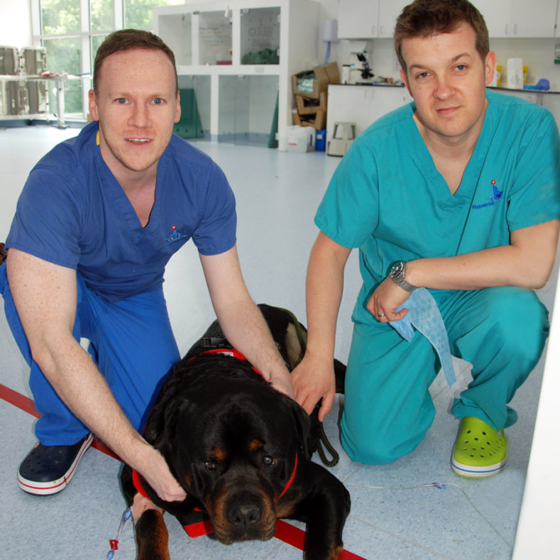 Gerard McLauchlan and Alex Horton prior to surgery with Rotweiller Tatu