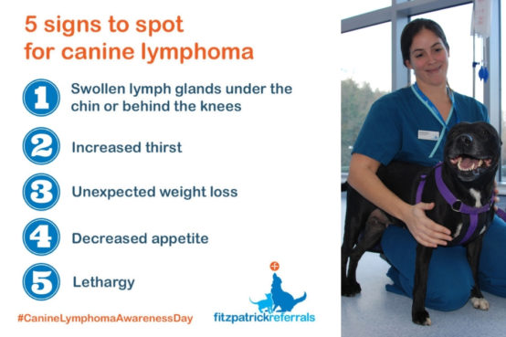 5 signs to spot canine lymphoma