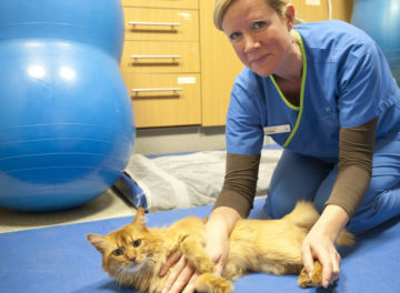 Physiotherapist Fiona Doubleday with feline patient