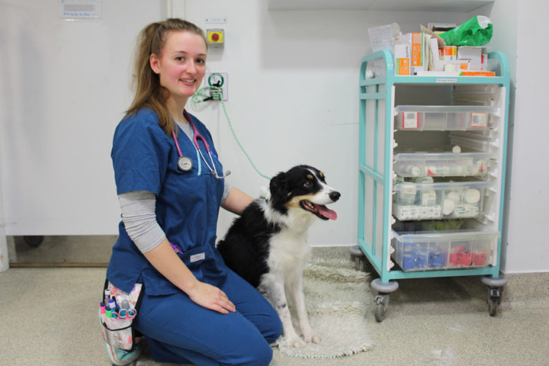 Registered Veterinary Nurse Gabby in prep with Border Collie patient Wall-e at Fitzpatrick Referrals