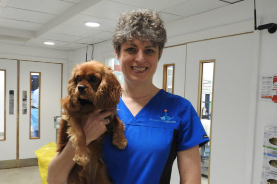 Professor Clare Rusbridge with a King Charles Cavalier Spaniel patient at Fitzpatrick Referrals