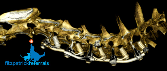 A 3D rendered CT scan of a FITS-Fitzateur device