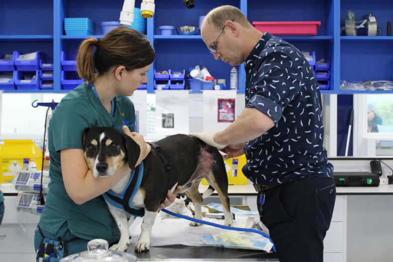 Registered veterinary nurse and specialist treating a patient at Fitzpatrick Referrals