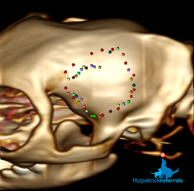 3D reconstruction from a CT scan of a cat's brain tumour by Fitzpatrick Referrals
