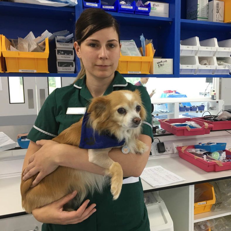 Veterinary nurse holding patient after coming round from surgery