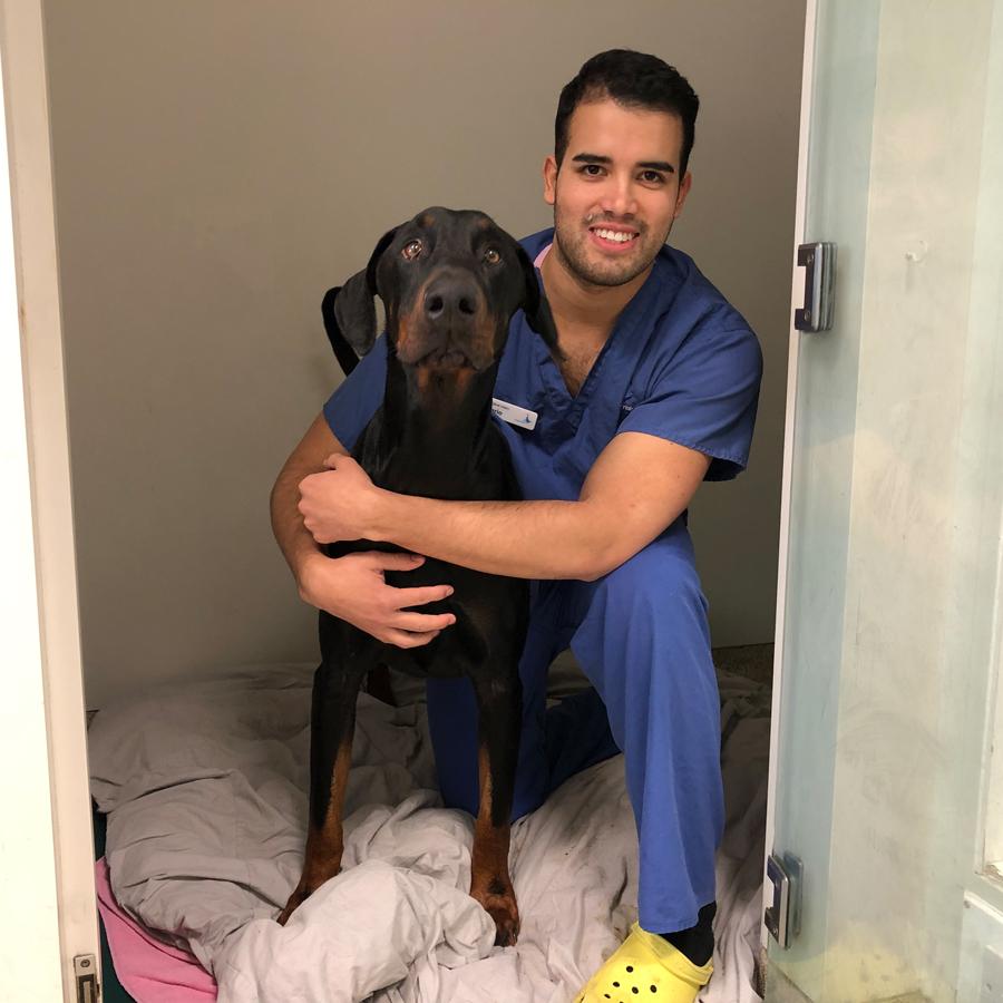 Doberman patient Beau with Intern Mario Garcia at Fitzpatrick Referrals