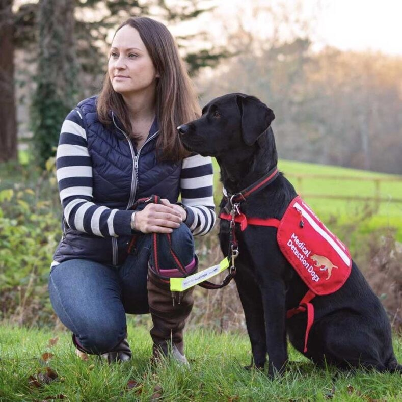 Black Labrador Assistance Dog - Medical Detection Dogs