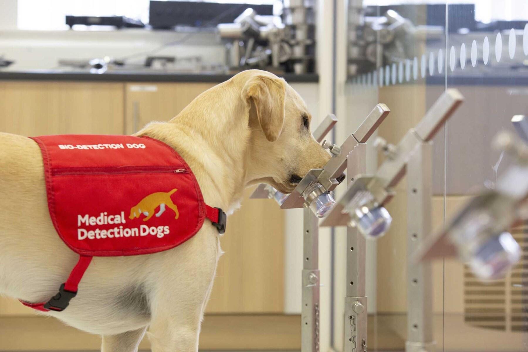 Bio detection dog