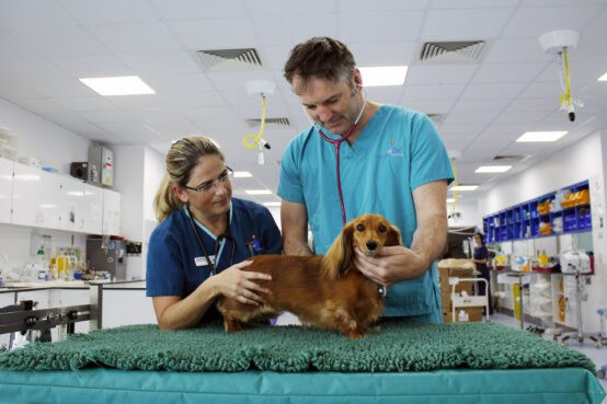 Professor Nick Bacon and RVN with Dachshund patient