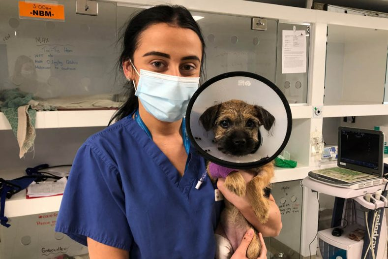 Surgical Intern Dr Sarah Lynam with Border Terrier patient at Fitzpatrick Referrals