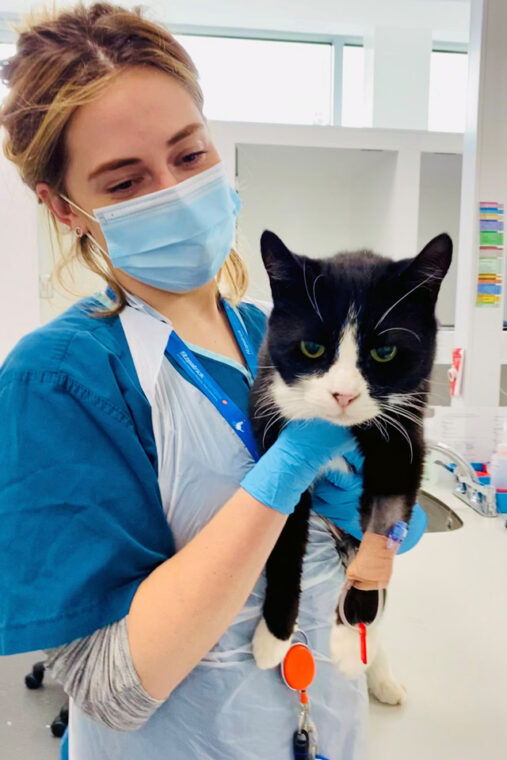 Feline patient being held by nurse in the cat ward at Fitzpatrick Referrals