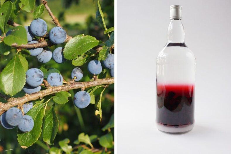 Sloe berries & sloe gin