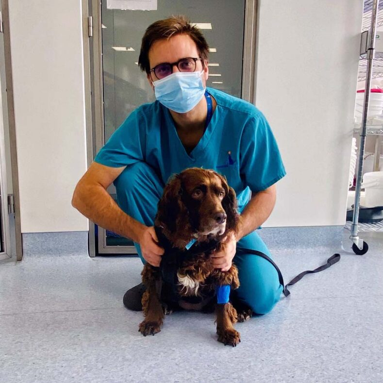 Cocker Spaniel in remission from lymphoma with Medical Oncologist Quentin Fournier