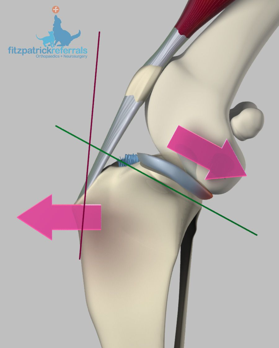 Cruciate Ligament Disease or Injury - Fitzpatrick Referrals